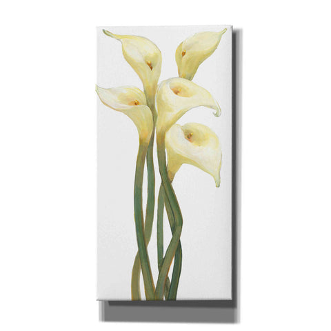 'Callas on Silver II' by Tim O'Toole, Canvas Wall Art