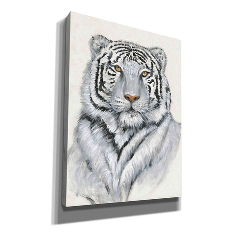 'White Tiger I' by Tim O'Toole, Canvas Wall Art