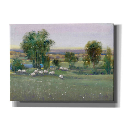 'Field of Sheep II' by Tim O'Toole, Canvas Wall Art