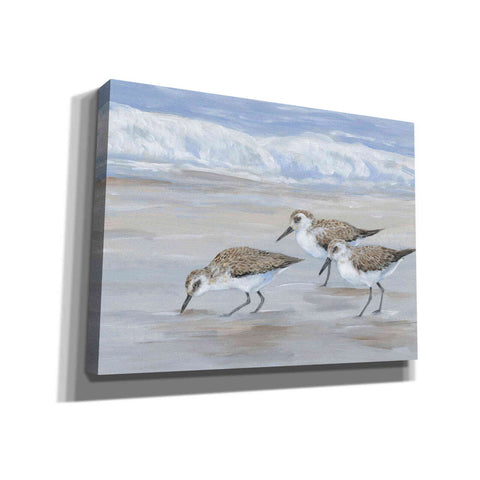 Image of 'Sandpipers II' by Tim O'Toole, Canvas Wall Art