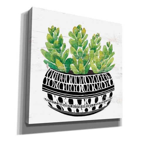 'Mud Cloth Succulent IV' by Cindy Jacobs, Canvas Wall Art