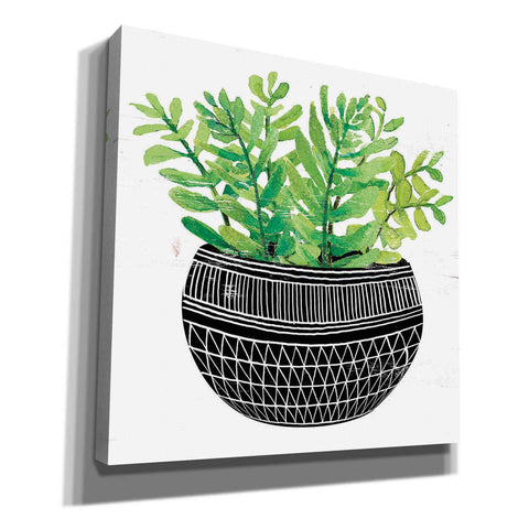 'Mud Cloth Succulent V' by Cindy Jacobs, Canvas Wall Art