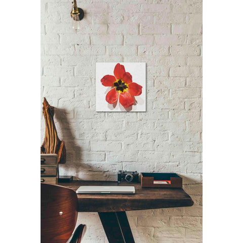 Image of 'Red' by Yellow Cafe, Canvas Wall Art,12 x 12