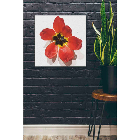 Image of 'Red' by Yellow Cafe, Canvas Wall Art,26 x 26