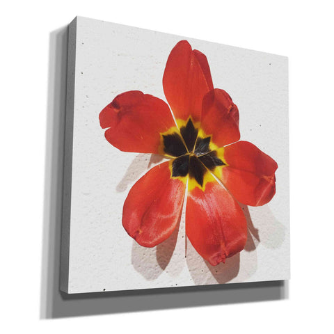 Image of 'Red' by Yellow Cafe, Canvas Wall Art,Size 1 Square