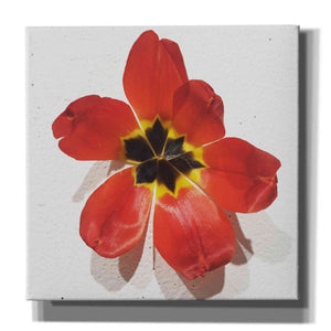 'Red' by Yellow Cafe, Canvas Wall Art,Size 1 Square