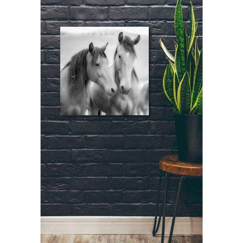 'Horse Friends' by Yellow Cafe, Canvas Wall Art,26 x 26