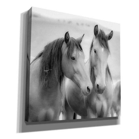 'Horse Friends' by Yellow Cafe, Canvas Wall Art,Size 1 Square