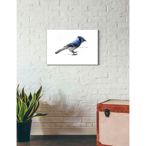 'Blue Jay' by Yellow Cafe, Canvas Wall Art,26 x 18