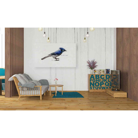 'Blue Jay' by Yellow Cafe, Canvas Wall Art,40 x 26