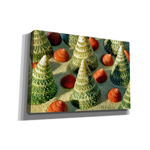 'Tree Shells' by Dennis Frates, Canvas Wall Art,Size A Landscape