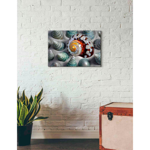 Image of 'Shell Spiral' by Dennis Frates, Canvas Wall Art,26 x 18