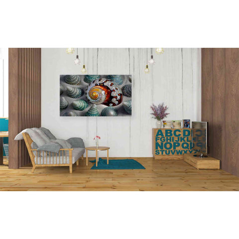 Image of 'Shell Spiral' by Dennis Frates, Canvas Wall Art,40 x 26