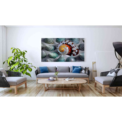 'Shell Spiral' by Dennis Frates, Canvas Wall Art,60 x 40