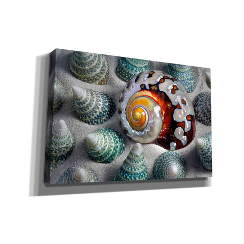 Image of 'Shell Spiral' by Dennis Frates, Canvas Wall Art,Size A Landscape