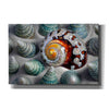'Shell Spiral' by Dennis Frates, Canvas Wall Art,Size A Landscape