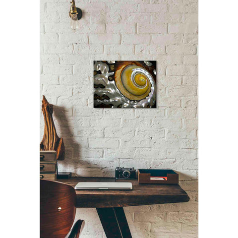 'Shell Spiral II' by Dennis Frates, Canvas Wall Art,16 x 12