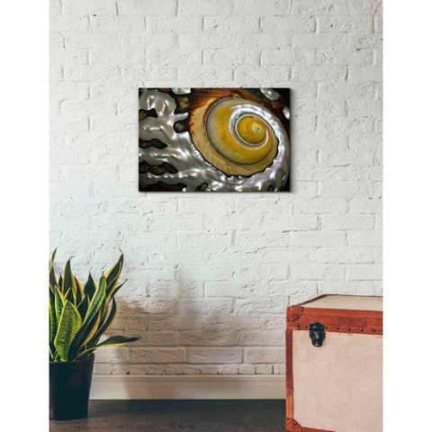 'Shell Spiral II' by Dennis Frates, Canvas Wall Art,26 x 18