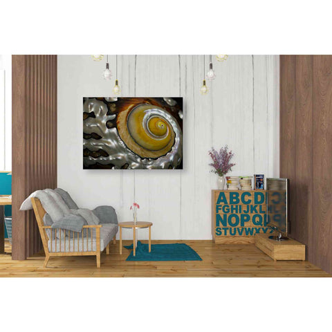 Image of 'Shell Spiral II' by Dennis Frates, Canvas Wall Art,34 x 26