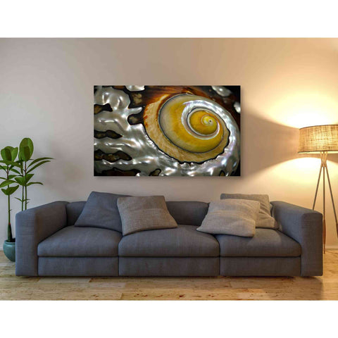 Image of 'Shell Spiral II' by Dennis Frates, Canvas Wall Art,54 x 40