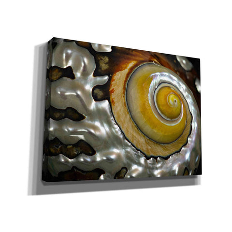 'Shell Spiral II' by Dennis Frates, Canvas Wall Art,Size B Landscape