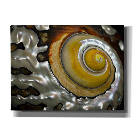 Image of 'Shell Spiral II' by Dennis Frates, Canvas Wall Art,Size B Landscape
