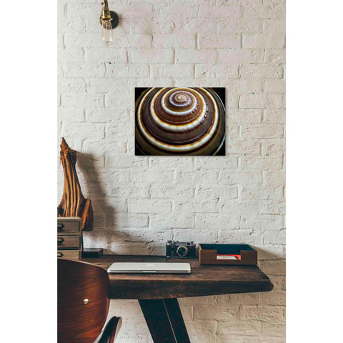 Image of 'Shell Spiral III' by Dennis Frates, Canvas Wall Art,16 x 12