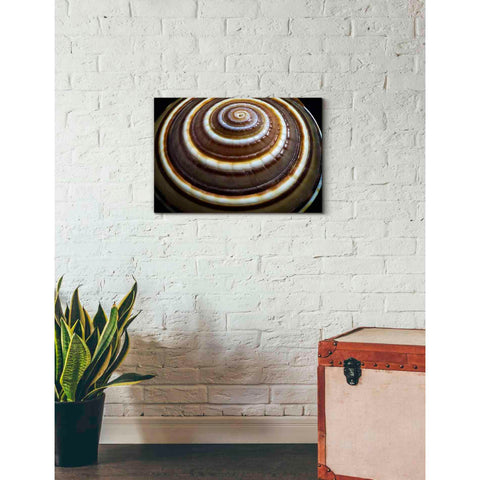'Shell Spiral III' by Dennis Frates, Canvas Wall Art,26 x 18