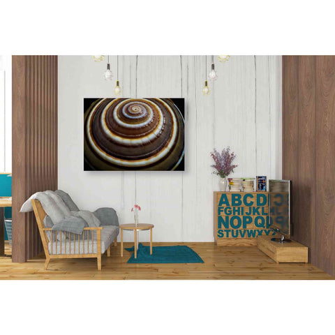 'Shell Spiral III' by Dennis Frates, Canvas Wall Art,34 x 26