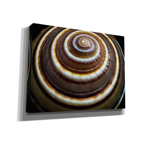 'Shell Spiral III' by Dennis Frates, Canvas Wall Art,Size B Landscape