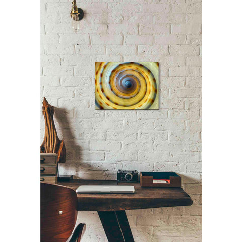 'Shell Spiral IV' by Dennis Frates, Canvas Wall Art,16 x 12