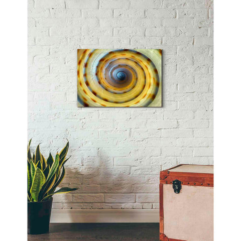Image of 'Shell Spiral IV' by Dennis Frates, Canvas Wall Art,26 x 18