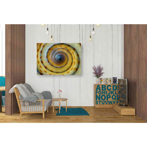 Image of 'Shell Spiral IV' by Dennis Frates, Canvas Wall Art,34 x 26