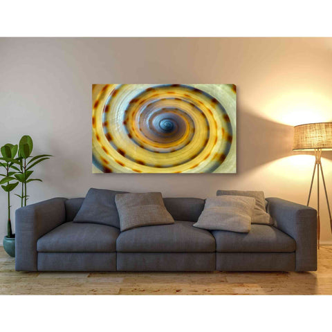 Image of 'Shell Spiral IV' by Dennis Frates, Canvas Wall Art,54 x 40
