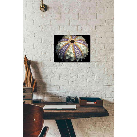 Image of 'Zig Zag' by Dennis Frates, Canvas Wall Art,16 x 12