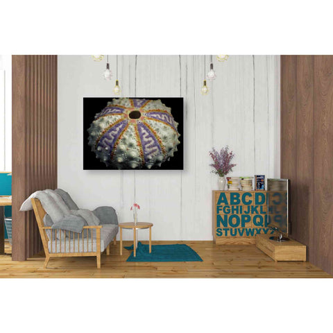 Image of 'Zig Zag' by Dennis Frates, Canvas Wall Art,34 x 26