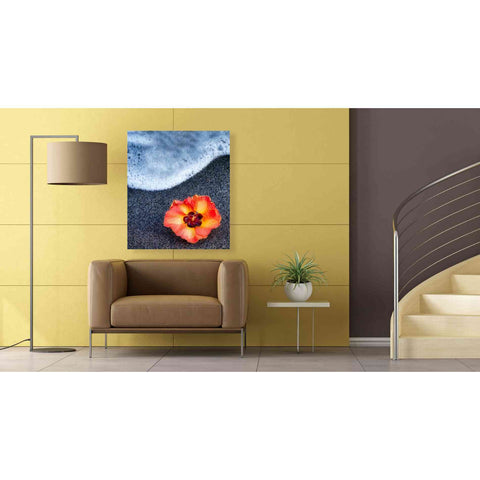 'Beach Floral' by Dennis Frates, Canvas Wall Art,26 x 30
