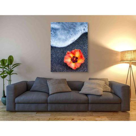 'Beach Floral' by Dennis Frates, Canvas Wall Art,40 x 54