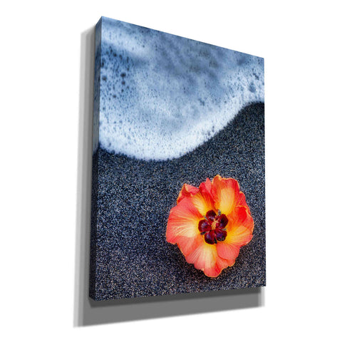 'Beach Floral' by Dennis Frates, Canvas Wall Art,Size C Portrait