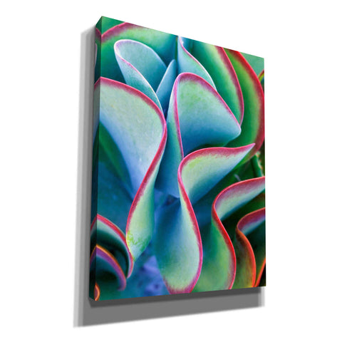 'Succulent VII' by Dennis Frates, Canvas Wall Art,Size C Portrait