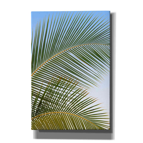 'Tropical II' by Dennis Frates, Canvas Wall Art,Size A Portrait