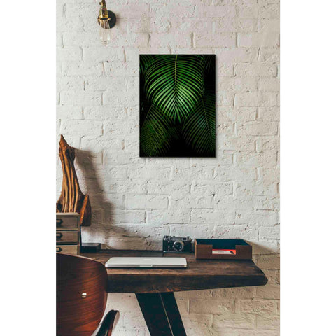 'Tropical IV' by Dennis Frates, Canvas Wall Art,12 x 16