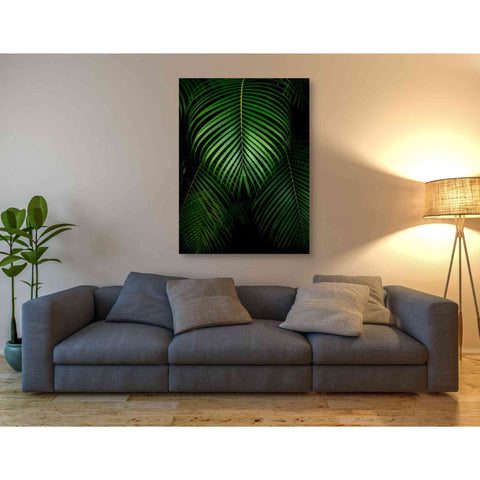 'Tropical IV' by Dennis Frates, Canvas Wall Art,40 x 54