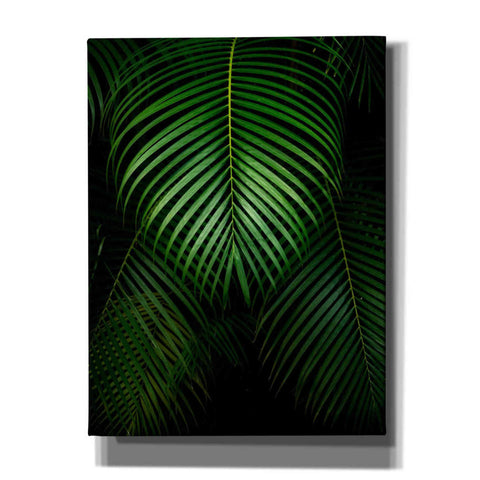 'Tropical IV' by Dennis Frates, Canvas Wall Art,Size C Portrait