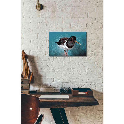 Image of 'Oyster Catcher' by Stuart Roy, Canvas Wall Art,18 x 12