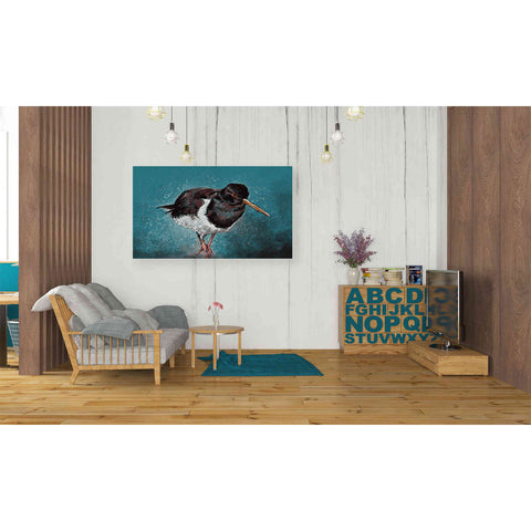 Image of 'Oyster Catcher' by Stuart Roy, Canvas Wall Art,40 x 26