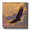 'Soaring Spirit' by Collin Bogle, Canvas Wall Art,Size 1 Square
