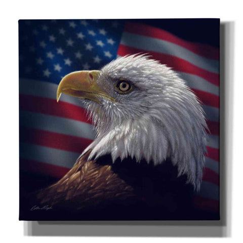 'American Bald Eagle' by Collin Bogle, Canvas Wall Art,Size 1 Square