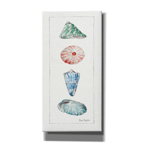 'Sea Finds III' by Lisa Audit, Canvas Wall Art