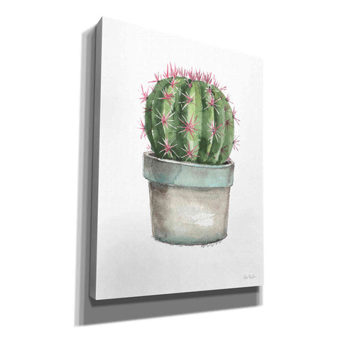 'Mixed Greens Succulent II' by Lisa Audit, Canvas Wall Art